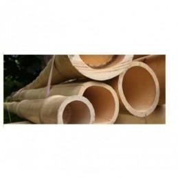 Canna in bamboo d. 8/10 cm altezza 3 mt per arredamento