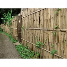 VERDELOOK Arella Beach in cannette di Bamboo 1,5x3m, per recinzioni e Decorazioni1,5